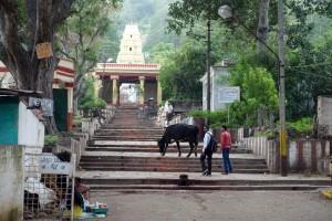 Vers-le-temple-de-Kurubarahalli-à-Mysore.