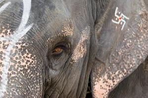 elephantsva